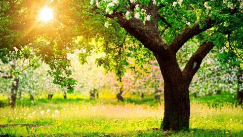 Xuân hồng ngày mới (Thái Nguyên - Trần Ngọc, Hồ Bích Ngọc)