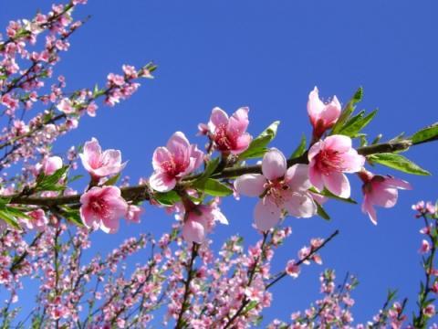 Xin chào mùa xuân (Nguyễn Duy - Tuyết Mai)