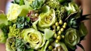 Hoa xanh dâng Mẹ (Thái Nguyên - Tuyết Mai Ly)