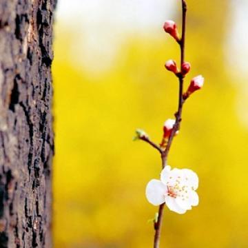 Mùa xuân đã đến (Thái Nguyên - Xuân Trường, Trần Ngọc)