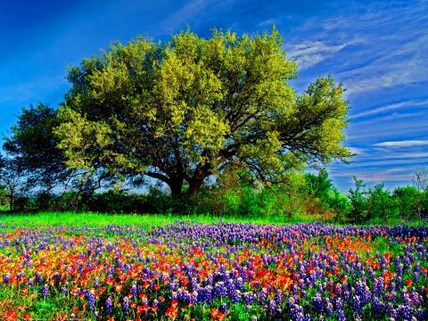 Mùa xuân đến rồi (Nguyễn Duy - Xuân Trường, Tuyết Mai Ly)