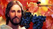 Chúa là Cây Nho (Ân Đức - Tường Vy)