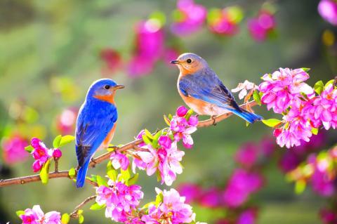 Họp mừng xuân mới (Nguyễn Duy - Hoàng Hiệp, Bích Hiền)